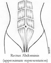 Illustration of normal abdomen, without diastasis recti/abdominal separation.